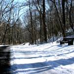 """Snow Stroll"" by SnowInSummer"
