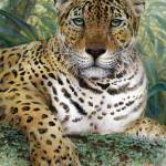 """JAGUAR"" by LisaMclaughlin"