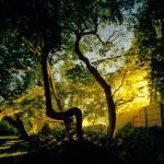 """Gardening at night"" by clarkmackey"