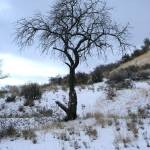 """""""Grandmother Tree"""" by CaioBentleyPhotography"""