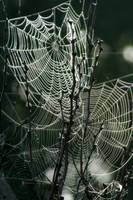 ghostly web