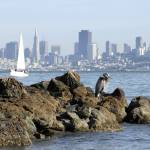 """Heron watch - Sausalito"" by BobFikePhoto"