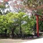 """Torii Gate in Spring"" by stabino"