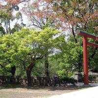 Torii Gate in Spring Art Prints & Posters by William He