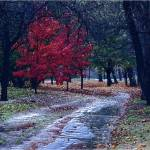 """Fall Rain"" by LunarImage"