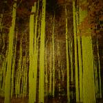 """""""Stand of Trees"""" by LunarImage"""