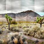 """Joshua Tree Redux - Photo Collage"" by tomhawkins"
