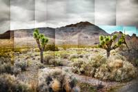 Joshua Tree Redux - Photo Collage
