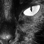 """A Cats Eye"" by EprobertOU"