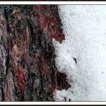"""""""Bark & Snow"""" by MedievalPanda"""