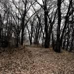 """Down a dark path"" by CaioBentleyPhotography"