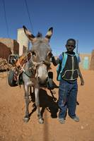 Mauritanian Boy and Donkey