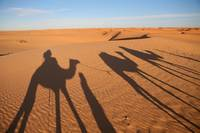 Shadow of a Camel Trek