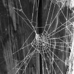 """""""Spider Web"""" by foxvox"""