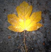 leaf 3 light