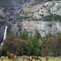 Yosemite Art Prints & Posters by Carol Cotton