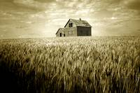Prairie - Farmstead Adrift In Field