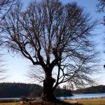 """San Juan Island tree"" by PhotosbyTerrell"