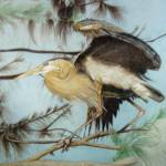 """The Great Blue Heron"" by WildArt"
