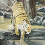 """India Tiger"" by WildArt"