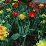 """Flower Garden"" by ctoby5"