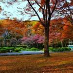 """""""hibiya park tokyo"""" by kayrakaya"""