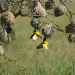"""""""Birds nesting"""" by jdparker"""