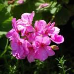 """flower"" by jsethphotography"