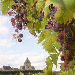 """CHATEAU VILLANDRY GRAPES"" by thelook"