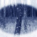 """bare winter trees"" by apprentice50"