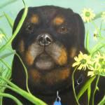 """""""The Dog Days of Summer"""" by sgodau"""