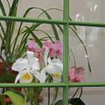 """B1 - Orchids - In The Window copy"" by robbdee40"