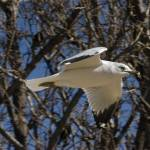 """Ring-Billed Gull"" by AwesomePhotography"