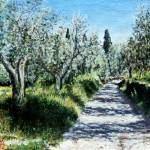 """OLIVE TREES IN RIMAGGIO"" by AiLartwoks"