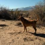 """""""Dog in desert"""" by arag"""