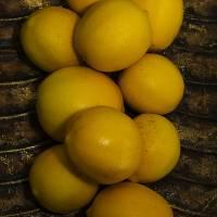 Lemons Art Prints & Posters by Steve Xavier