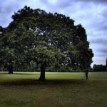 """Richmond park"" by GianfrancoTodini"