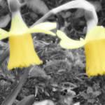 """Yellow"" by PJArthur"