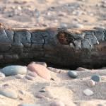 """Beach Log"" by FantasyVisions"