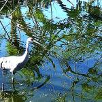 """""""wading ibis"""" by zoeythelioness"""