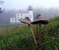 Mushrooms and Lighthouse Seven