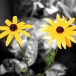 """""""Yellow Flowers"""" by dchristi"""