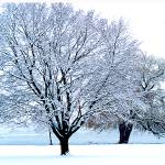 """""""The Winter Blues"""" by dchristi"""