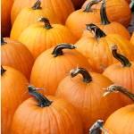 """Pumpkins"" by dchristi"