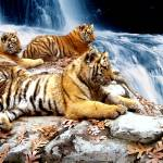"""""""Tigers"""" by dchristi"""
