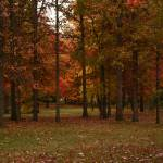 """Fall Colors from Michigan"" by rajhema"