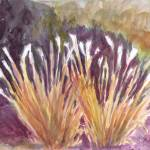 """Pampas Grass Abloom"" by SharonGiles"