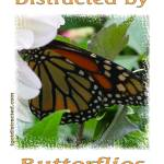 """Distracted by Monarch Butterflies 04171"" by quotes"