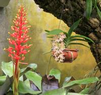 Hanging Orchid and Bromeliad - Fairchild Gardens