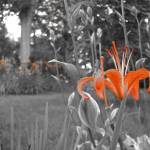 """""""orange on black and white"""" by mgstanton"""